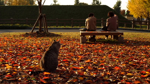 山形市内の中心に位置する山形城址。10月の中旬から紅葉を楽しむことが出来ます。